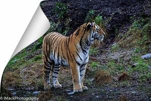 WildlifePark.05-0536.jpg-0584