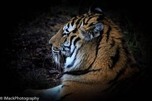 WildlifePark.05-0536.jpg-0598