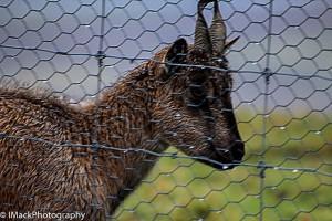 WildlifePark.05-0536.jpg-0604