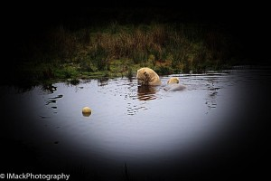 WildlifePark.05-0536.jpg-0617