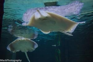 Aquarium-1-jpeg-1