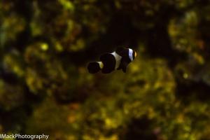 Aquarium-1-jpeg-10
