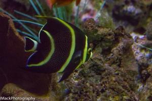 Aquarium-1-jpeg-11