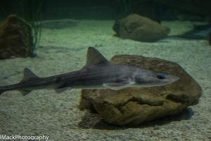 Aquarium-1-jpeg-17