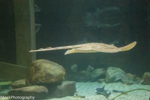 Aquarium-1-jpeg-18