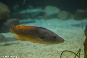 Aquarium-1-jpeg-20