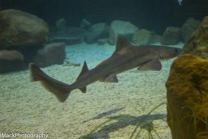 Aquarium-1-jpeg-21