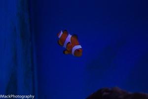Aquarium-1-jpeg-9