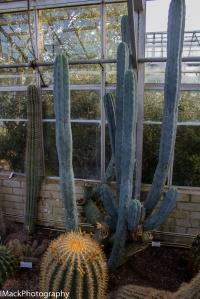Botanical-1-jpeg-12