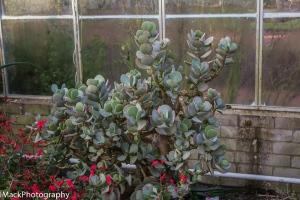 Botanical-1-jpeg-8