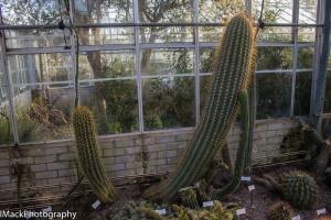 Botanical-1-jpeg-9