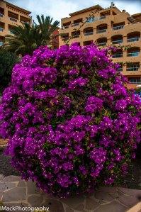 Fuerteventura1jpeg-29